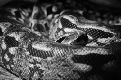 Lodz Zoo Snake-5