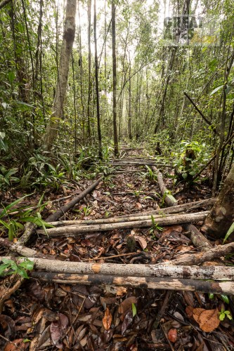 illegal logging deforestation Borneo