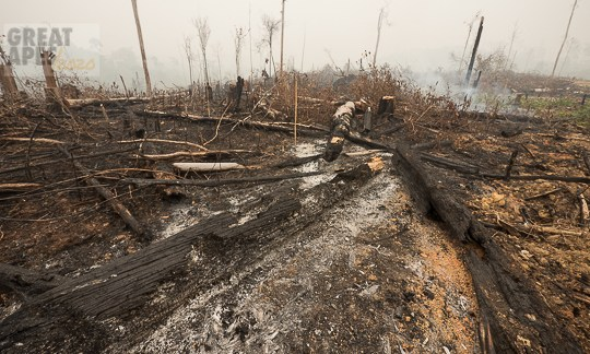 fire deforestation slash-and-burn, C. Kalimantan, Borneo