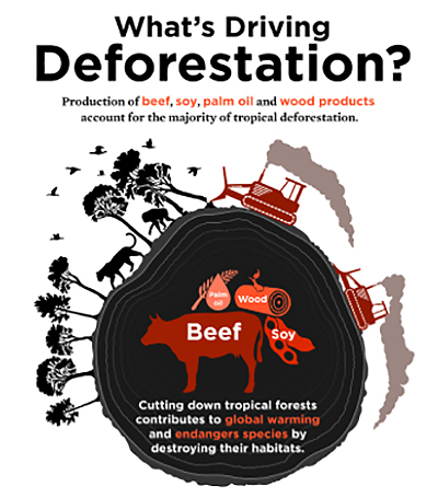 What-Drives-Deforestation from USCUSA.org