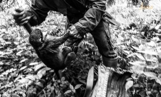 bushmeat poaching primate Cameroon