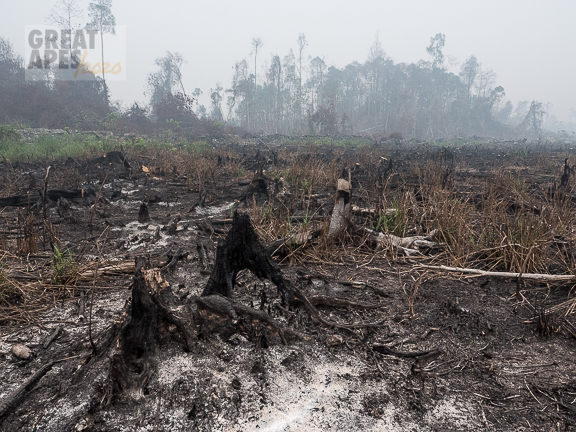 deforestation fire palm oil -1250060