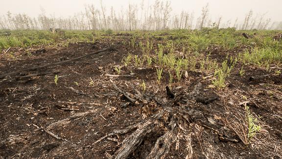 rainforest peatland fire Kalimantan Borneo