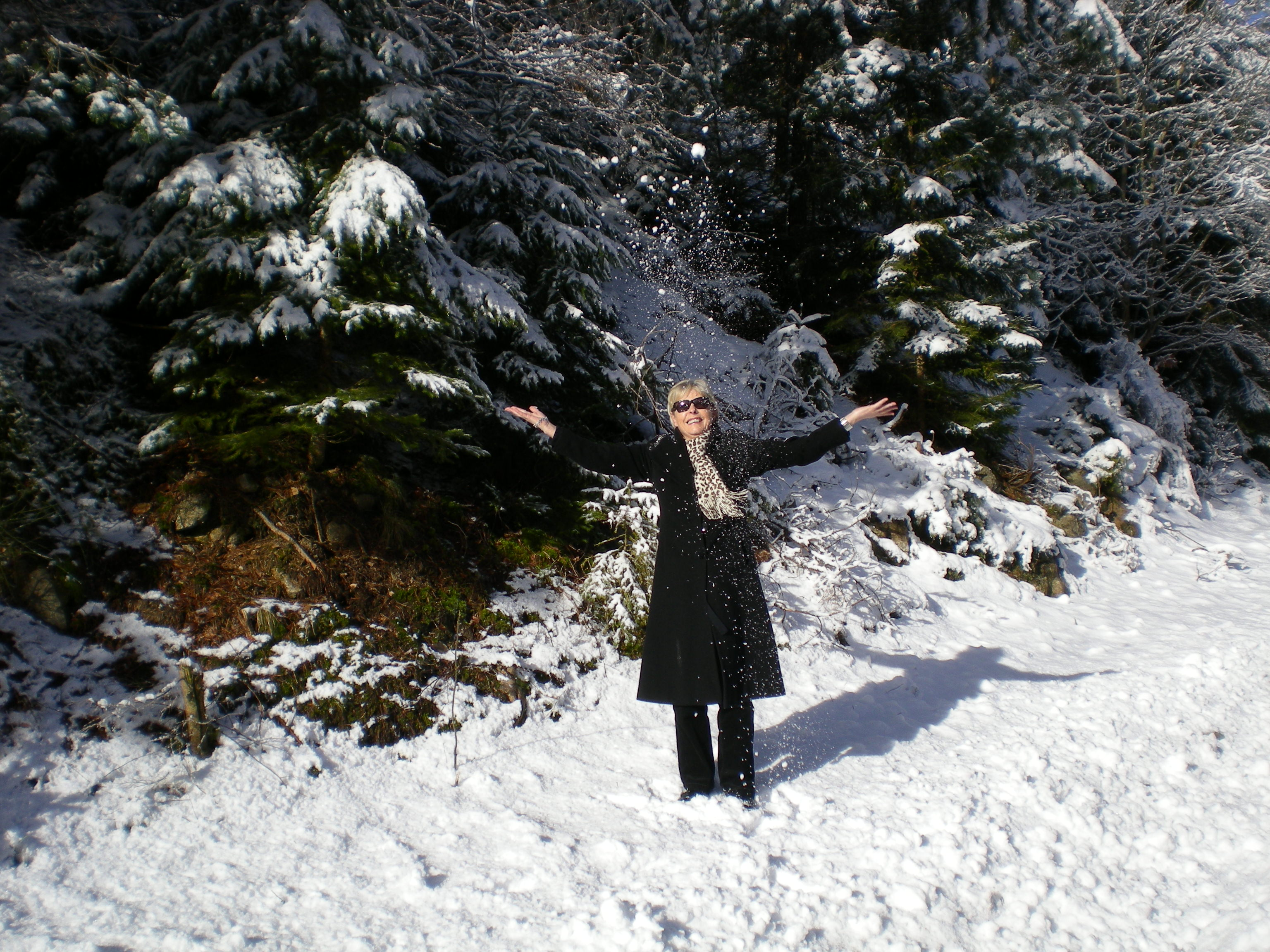 A walk in the Black Forest