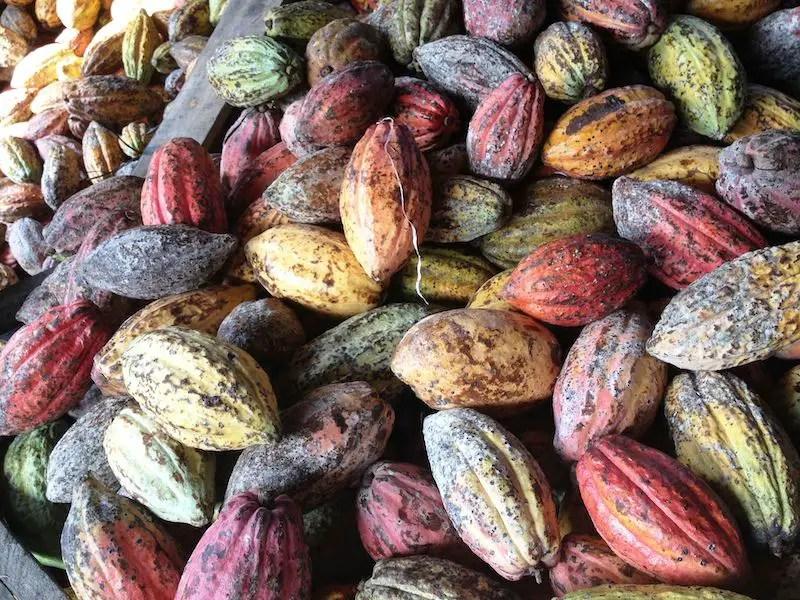 https://i2.wp.com/apetitoenlinea.com/wp-content/uploads/2021/05/Cacaotrace.jpeg?fit=800%2C600&ssl=1