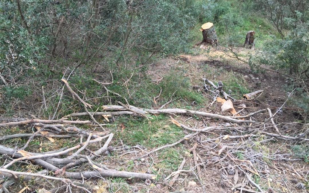 El PP de Torrent organiza una jornada de voluntariado para limpiar el bosque del Vedat