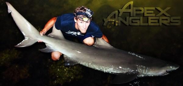 AJ Rotondella - Apex Anglers - Big Lemon Shark 1 copy