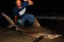 "New Leaderboard Shark - 81"" Sandbar"