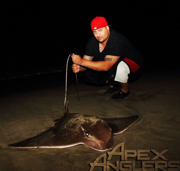 Our lure brought in some uncommon water types. Shawn encounters a rare Bull-nose ray.