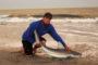 Jersey Surf Sharking Slam - Sandbar, Sand Tiger... What else?!