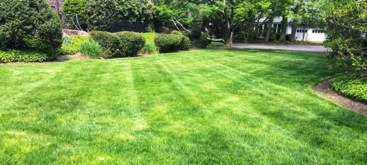 Mowing diagonal lines into lawn creates direction