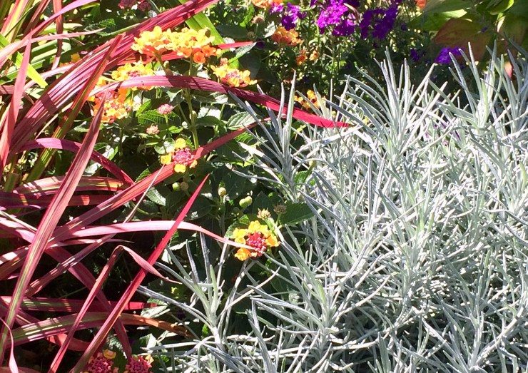 seasonal color with annuals