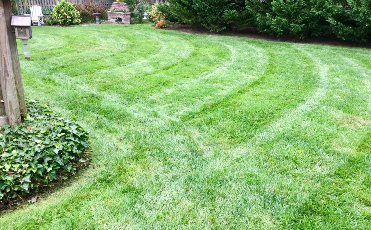 curved stripes in lawn give personality