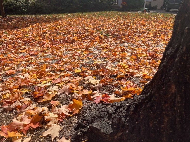 Fall leaf blowing and removal