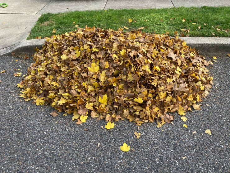 scheduled Fall leaf removal visit