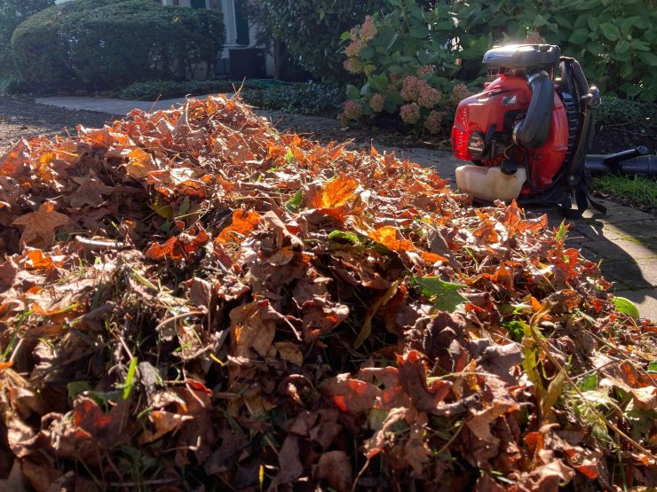 Leaf pile and blower