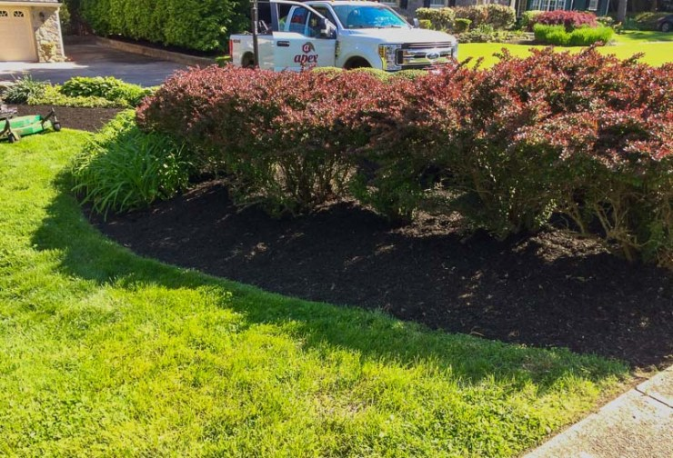 Residential Yard Cleanup and Mulching