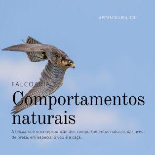 Falcoaria baseia-se em comportamentos naturais