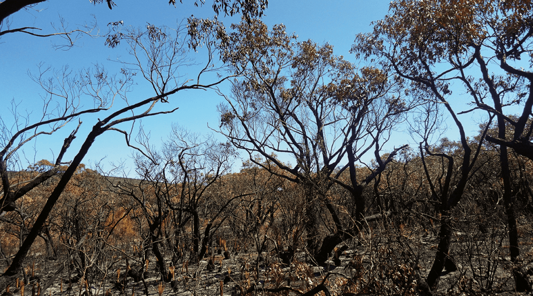 Research has examined different burning scenarios around the Otway Ranges in Victoria to assess future bushfire risk.