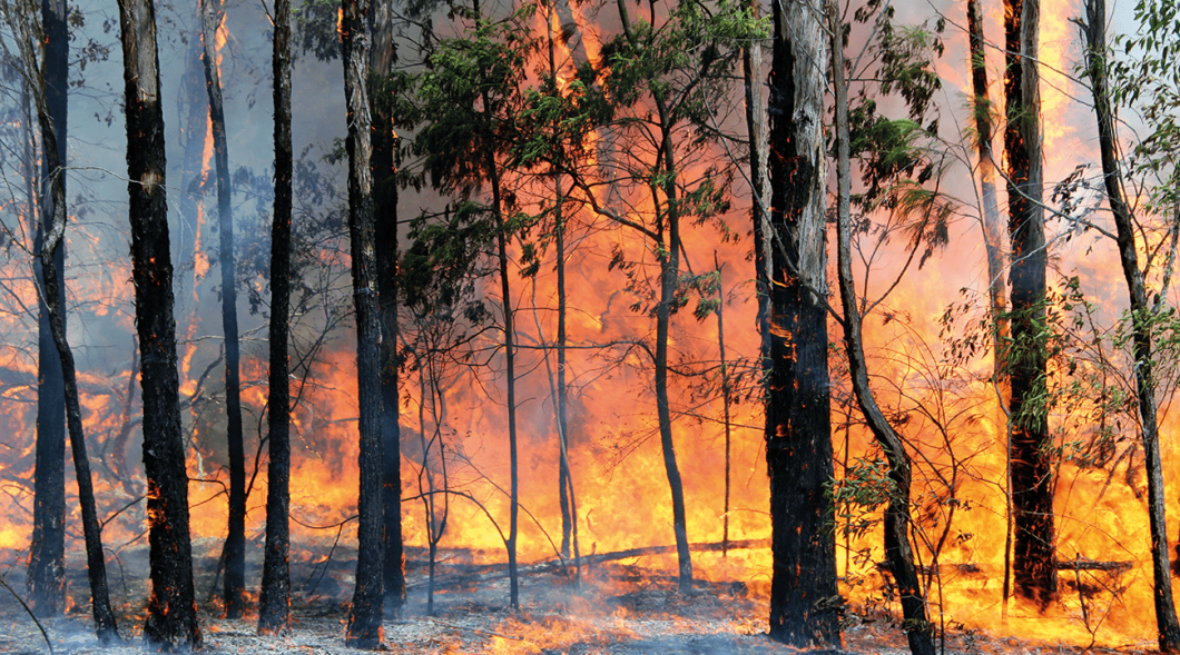 Tasmania can expect roughly double the fire danger over twice the area of land by the end of this century.