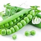 Mr. Pareto, Mr. Juran, Mr. Koch, Garden Peas, and Your Care Management Practice