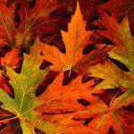 warm fall leaves