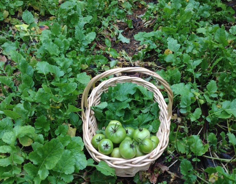 Farm Fresh Foodways & Fried Green Tomatoes