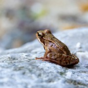 """A Little Happier: The Fable """"The Scorpion and the Frog"""" Warns Us to Stay Wary of the Dangerous Ones"""