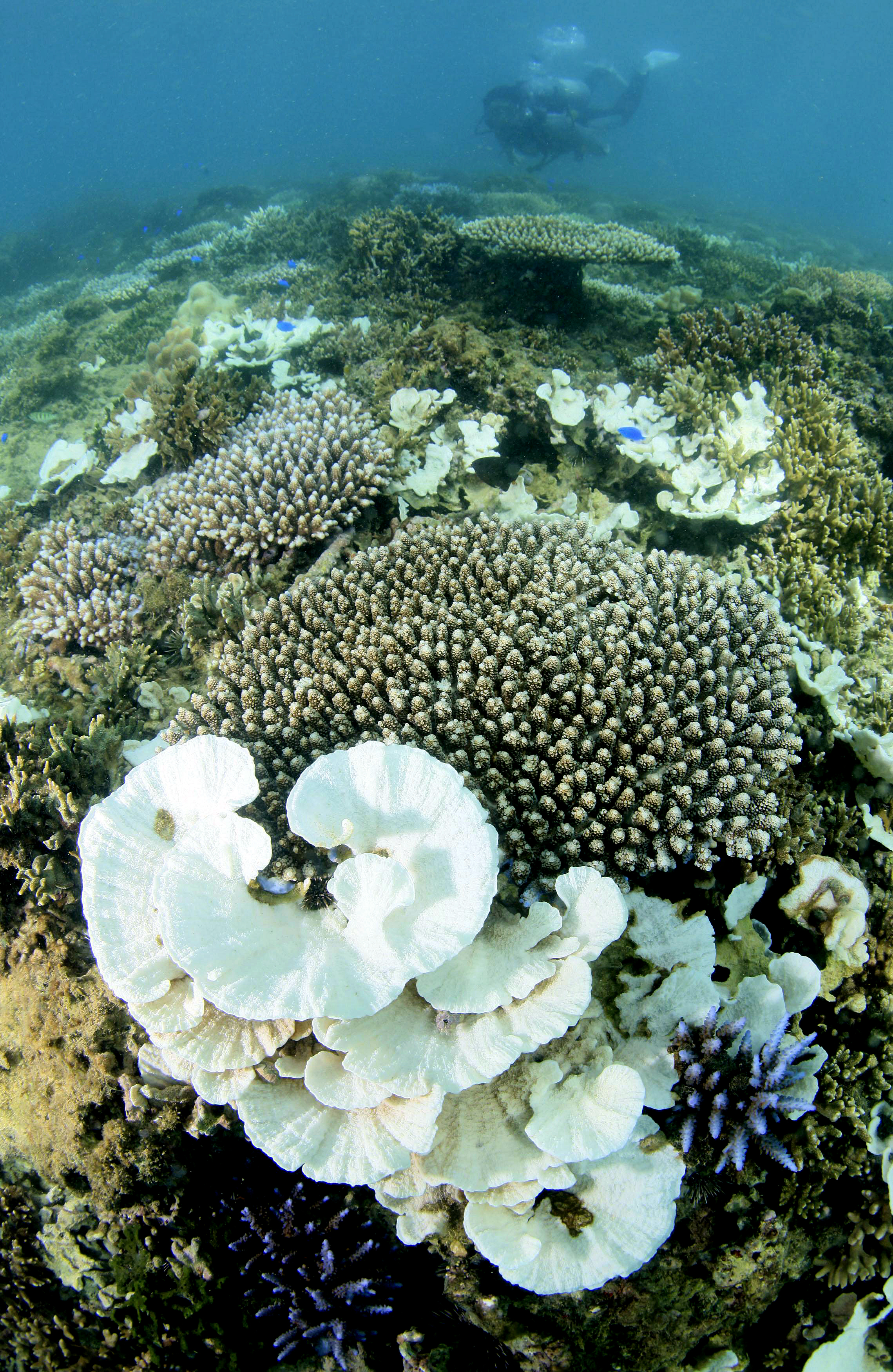 Why Coral Reefs Are Dying Sunscreen Killing Reefs