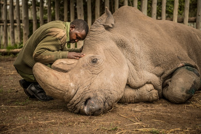 This Photo of the Last Rhino of His Kind Helped Define 2018 | Time