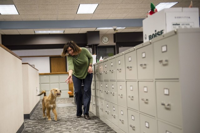 Admin assistant Barb Potts throws a ball for a dog at Bangor Township Hall. Photo: TNS