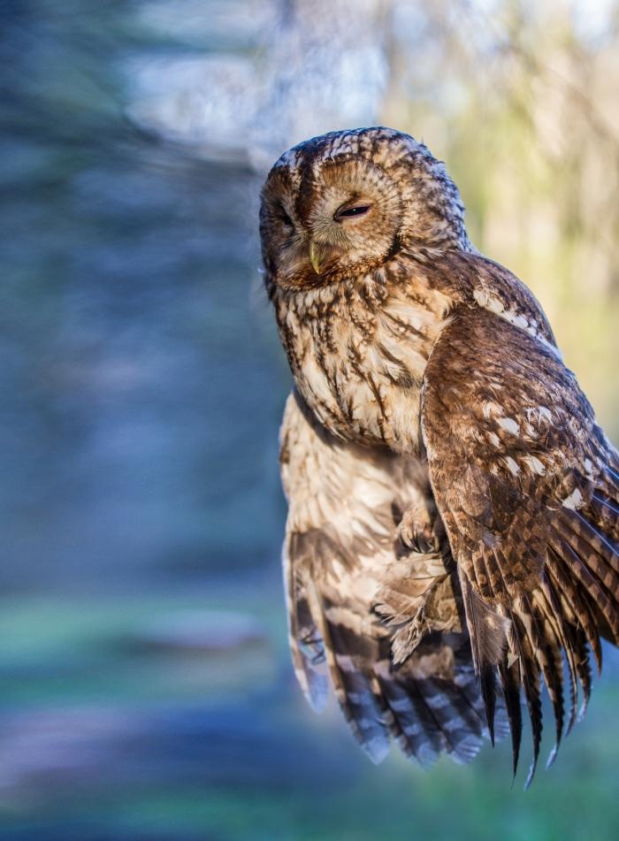 01 Peledu stebejimas su ornitologais - Giedres Streikauskaites nuotr.