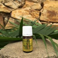 ESSENTIAL OILS & GOD'S WORD | CISTUS