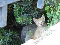 cats.. all over, Skiathos