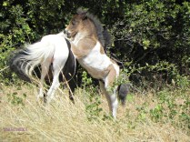 mummy horse and little one, playing.