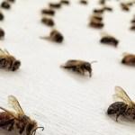 L'artiste Sarah Hatton met en scène les abeilles