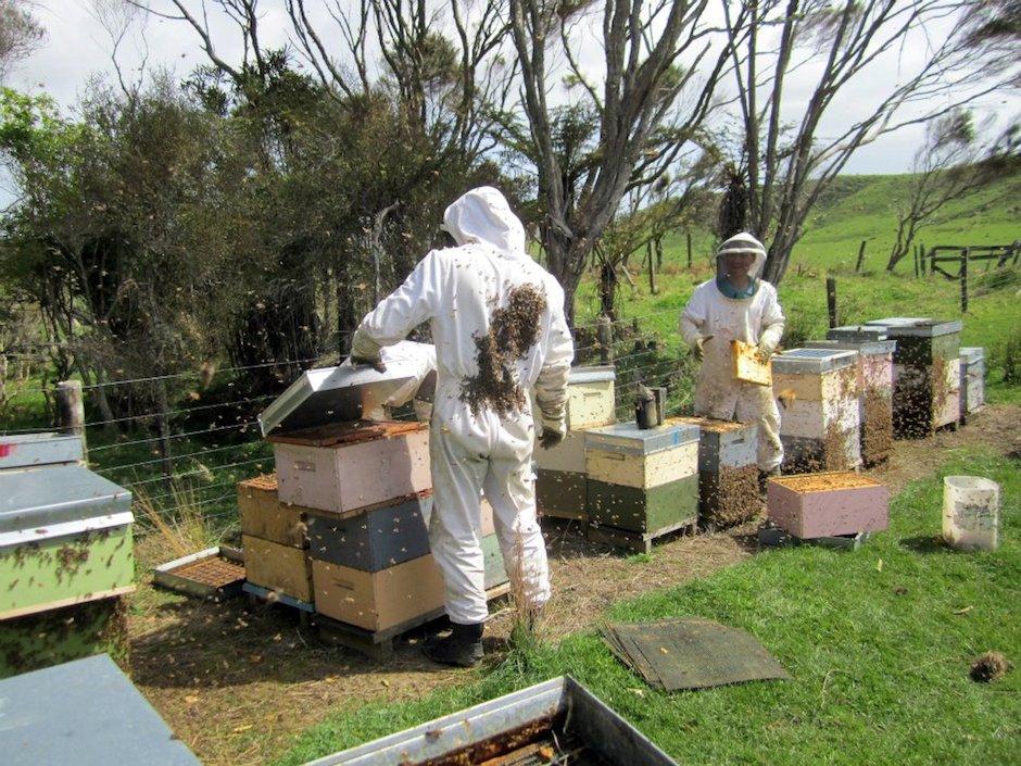 Tim et William Stewart - Silver Fern Honey