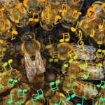 Écoutez le mystérieux chant royal des abeilles