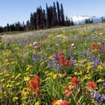 Contre les néonicotinoïdes, la stratégie des abeilles pour survivre