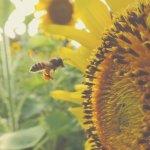 Dixit Motiwala - Sauvez les abeilles en parrainant une ruche
