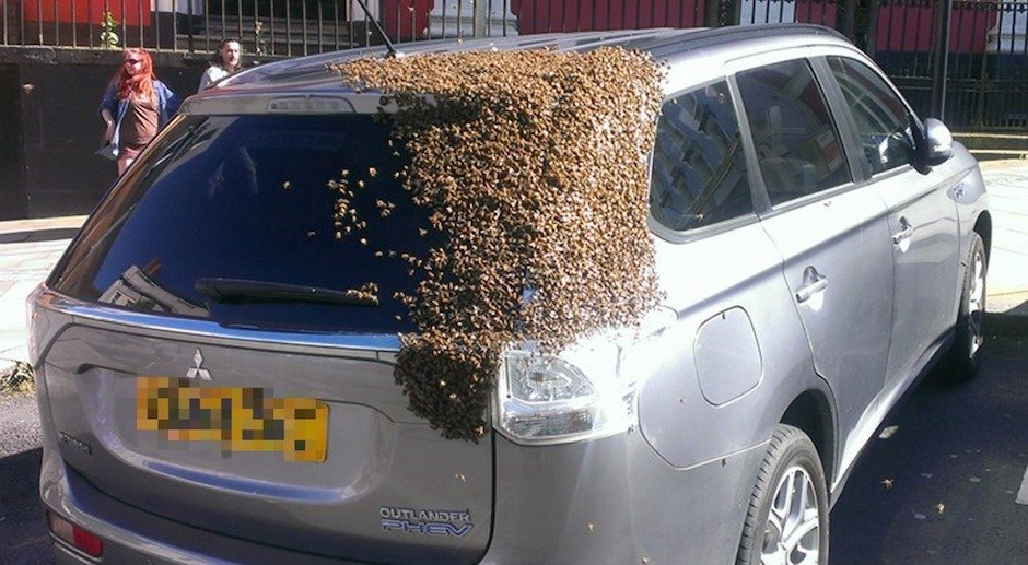 20,000 Bees Chased a Car for 24 Hours to Rescue Their Trapped Queen Bee