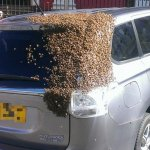 Bees Swarm Car With Queen Likely Trapped Inside
