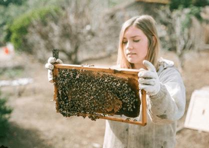 apicultrice en Californie
