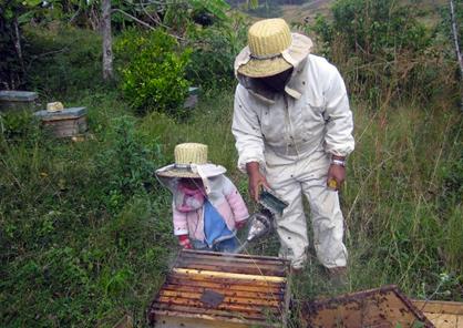 Rakotondrasoa Tolojanahary dit « Tolotra » : apiculteur dans la région de Analamanga au Madagascar.