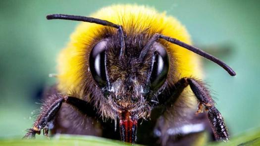 secreto abejorros