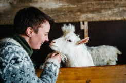 pink_iceland_west_gay_lesbian_travel_iceland_luxury_tours_goat