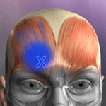 Muscle Trigger Point Anatomy v2.4.8 APK Paid