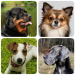 Download Dog Breeds – Quiz about all dogs of the world! 1.98 APK