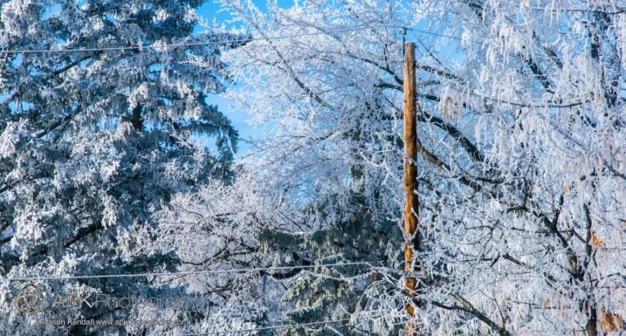 Winter frost in the trees of Regina, Saskatchewan