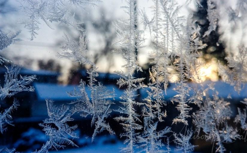 Winter Light Celebration
